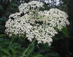 flowering native plants using georgia native plants roadside white shrubs
