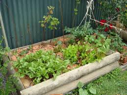 Gardening For Beginners Vegetables by Top 30 Designing A Beginner Vegetable Garden Marks Veg Plot