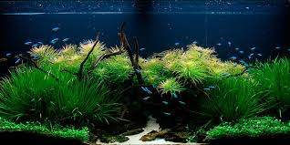 Takashi Amano Aquascaping Techniques Understanding Nature Aquascaping Style The Aquarium Guide