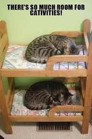 Bed Meme - kitty bunk bed meme guy