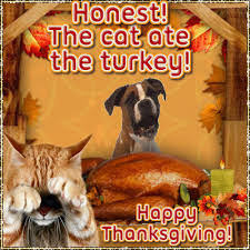the cat ate the turkey free happy thanksgiving ecards greeting