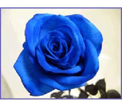 blue roses delivery send blue roses in boston ma flowers