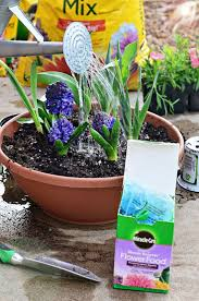Spring Flower Garden 12 Best Boost Your Garden With Miraclegro Plant Food Images On