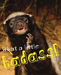 Meme Honey Badger - about honey badger don t care