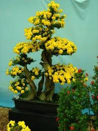 best 25 bonsai for sale ideas on small plants mini