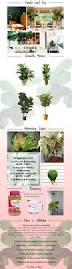 97 best my plants images on pinterest plants gardening and flowers