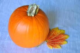 thanksgiving fun thanksgiving fun in burlington burlington ontario
