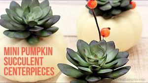 thanksgiving crafts diy pumpkin succulents centerpiece youtube