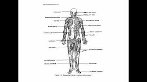 human anatomy syllabus choice image learn human anatomy image