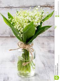 of the valley bouquet bouquet of of the valley flowers stock photo image 41255130