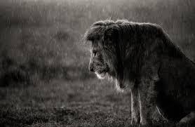 top shot the lion and the rain top shot editors u0027 spotlight