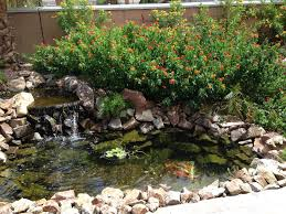 my backyard pond las vegas nevada garden ideas pinterest
