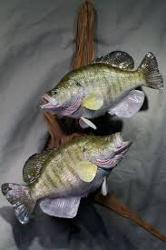 fish wall mounts 19 best fish images on pinterest taxidermy fishing stuff and