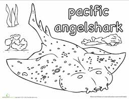 pacific angel shark coloring