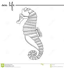 sea life the seahorse black and white drawing original doodle