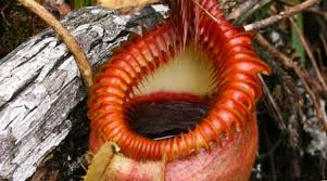 Plants In The Tropical Rain Forest - rainforest plants social studies