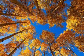 fall leaves change color arizona phoenix times
