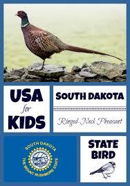 state bird of south dakota south dakota state bird usa for kids