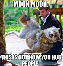Moon Moon Meme - the saga of moon moon the werewolf page 1