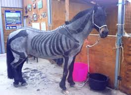 halloween horse 72 best horse body art images on pinterest horses horse stuff
