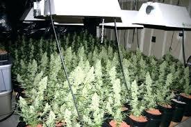 where to buy indoor grow lights indoor gardening lights grow ls for indoor plants cheap led