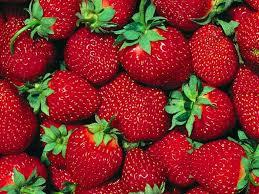 amazon com fort laramie everbearing strawberry 25 bare root