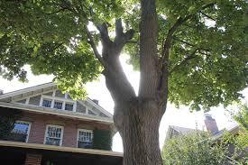trees st catharines