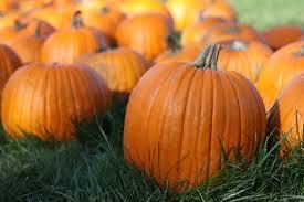 halloween pumpkin patch background pumpkin late backgrounds desktop ololoshenka pinterest