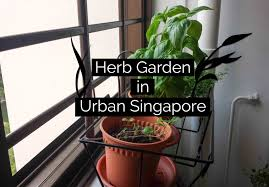 apartment herb garden an easy indoor herb garden idea perfect for