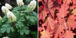 fall color shrubs michigan landscape blog