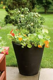 container gardening beautiful container gardening ideas inspired home life
