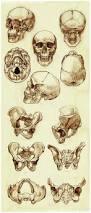 Human Anatomy Skeleton Diagram 49 Best Skeleton Illustrations Images On Pinterest Skeletons