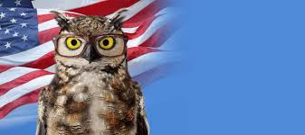 americas best owl commercial actress america s best contacts eyeglasses prescription glasses