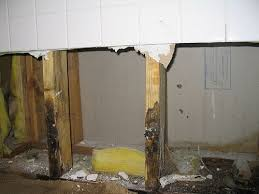 Getting Rid Of Mold In Basement by Best 25 Cleaning Shower Mold Ideas On Pinterest Clean Shower