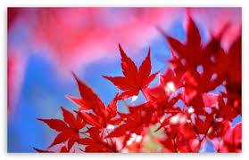 late autumn colors 4k hd desktop wallpaper for 4k ultra hd tv