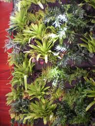Indoor Vertical Gardens - indoor vertical garden eclectic san francisco with