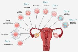 light bleeding during pregnancy 8 early signs and symptoms of pregnancy implantation