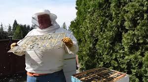 backyard beekeeping runnymede estates honey canada youtube