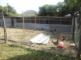 chicken house plans kenya with easy to build backyard chicken coop