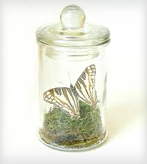 real butterfly terrarium kit camillus inactive crafting u0026 diy