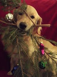 151 best christmas pets images on pinterest animals christmas