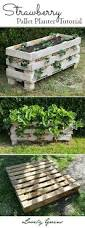 Diy Strawberry Planter by The Tiberian Growdome System Strawberry Planters Grow
