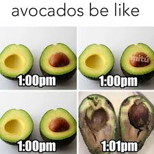 Healthy Food Meme - best 25 food meme ideas on pinterest funny food memes funny