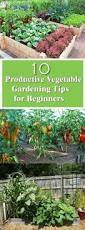 innovative vegetable gardening tips for beginners vegetable