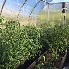6 x 10 harmony green palram greenhouse backyard greenhouse
