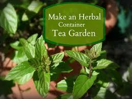 Herb Container Garden - livin u0027 in the green make an herbal container tea garden