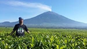 Teh Kayu Aro kebun teh kayu aro latar gunung kerinci seger dehh liat beginian