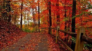 cute autumn backgrounds beautiful autumn wallpaper 69 wallpapers u2013 hd wallpapers