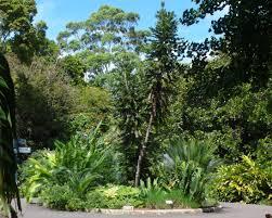 The Royal Botanic Gardens Sydney Royal Botanic Gardens