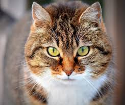 Blind Cat Sanctuary Join Me And Click To Donate Shop For Your Cause